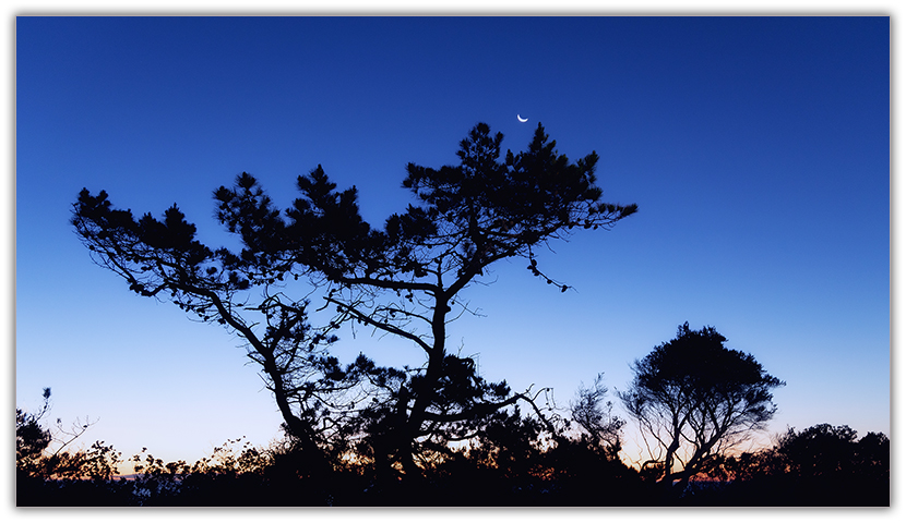 Mornington Moonrise