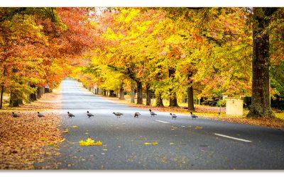 Duck Avenue